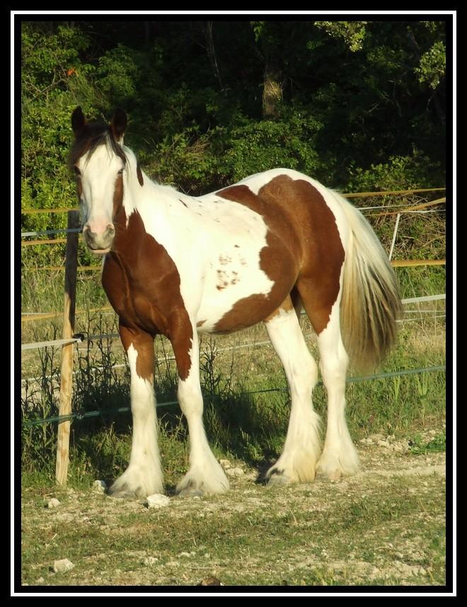 Les chevaux des Anges du Ventoux Dscf4518