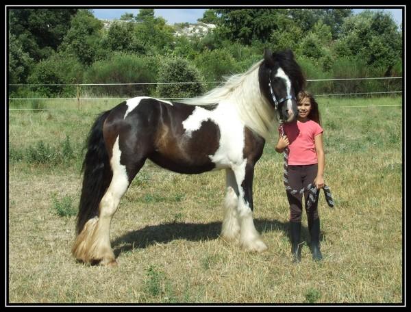 Les chevaux des Anges du Ventoux Dscf6318
