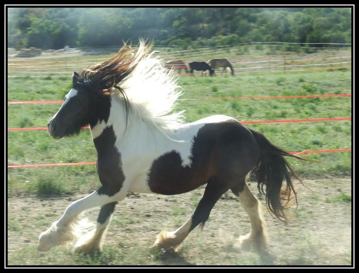 Les chevaux des Anges du Ventoux Dscf6514