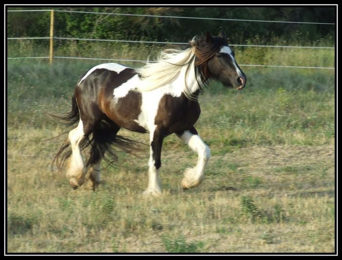 Les chevaux des Anges du Ventoux Dscf6717