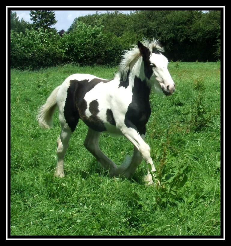 Les chevaux des Anges du Ventoux Dscf7852
