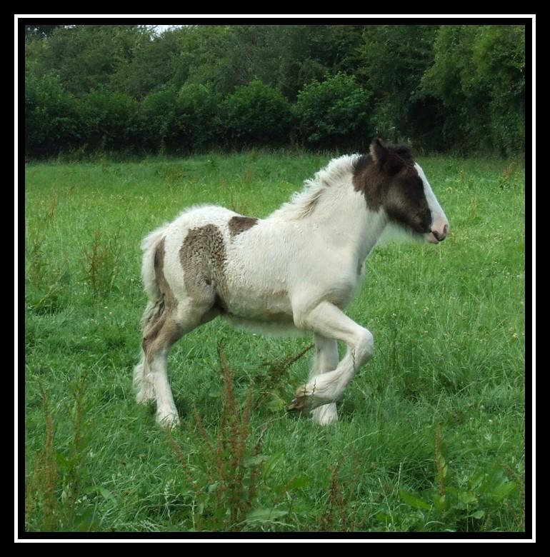 Les chevaux des Anges du Ventoux Dscf8144