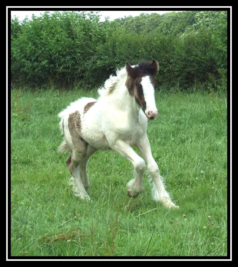 Les chevaux des Anges du Ventoux Dscf8145