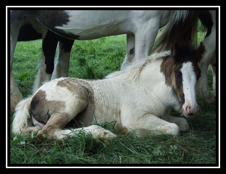 Les chevaux des Anges du Ventoux Dscf8217