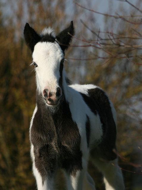 Les chevaux des Anges du Ventoux Img96210