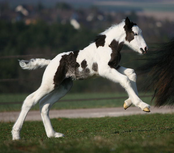 Les chevaux des Anges du Ventoux Img96910