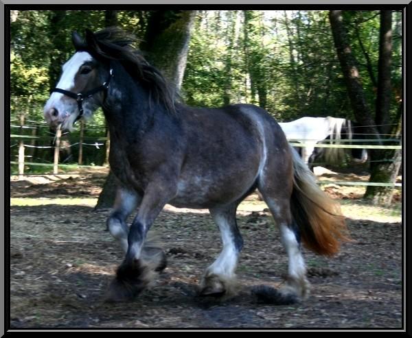 Les chevaux des Anges du Ventoux Img_4612
