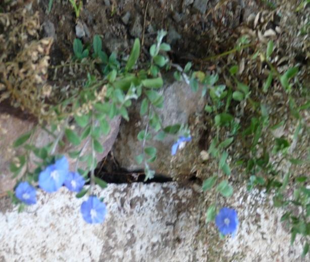 Les fleurs bleues Rn410
