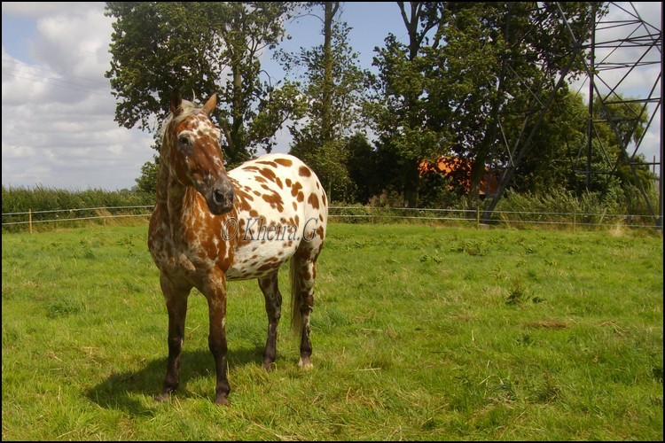 [ Nous a malheureusement quitté ✝ ] Texas, cheval aveugle en retraite au refuge [Parrainé par Sabine] Texas_20