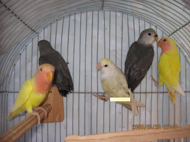 Post your favorite birds Img_3114