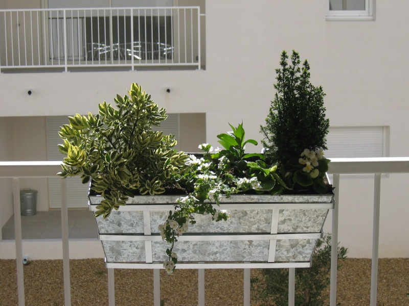 ma première jardinnière Img_6410