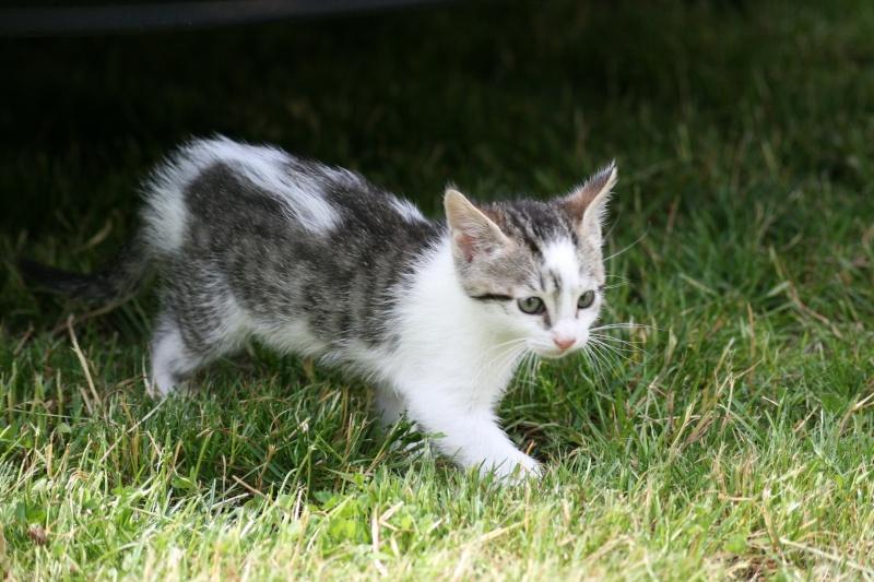 [ADOPTE]chaton en RP (91) Img_5611