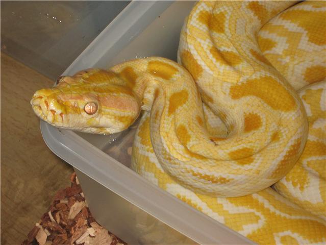 post question python molure - Page 2 Getatt10