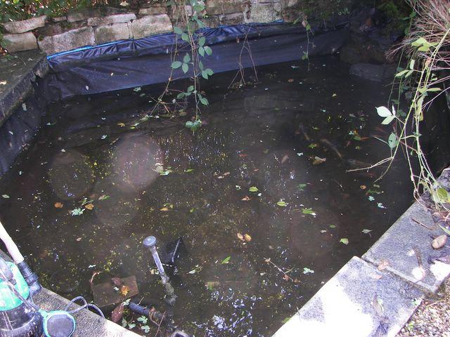 Construction Et Agrandissment de mon Bassin 100_2517