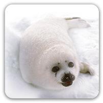 à mon tour........ Seals_10