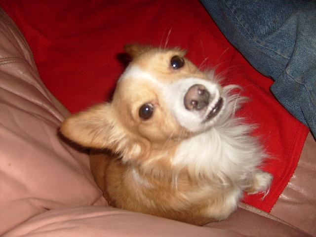 «Ogni anno in Italia uccisi 25 mila cani» Doghi210