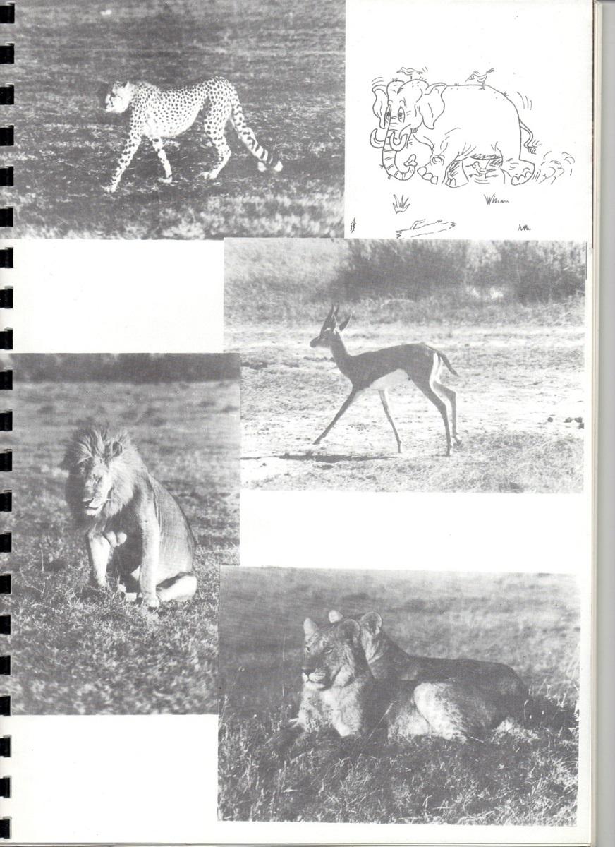 RHÔNE (BSL) - Page 18 264