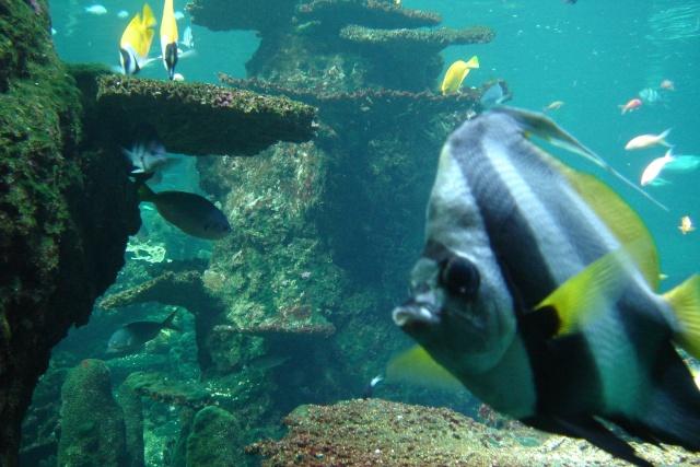Aquariums d'Amnéville, de Nancy et Nausicââ Boulogne Dsc03912