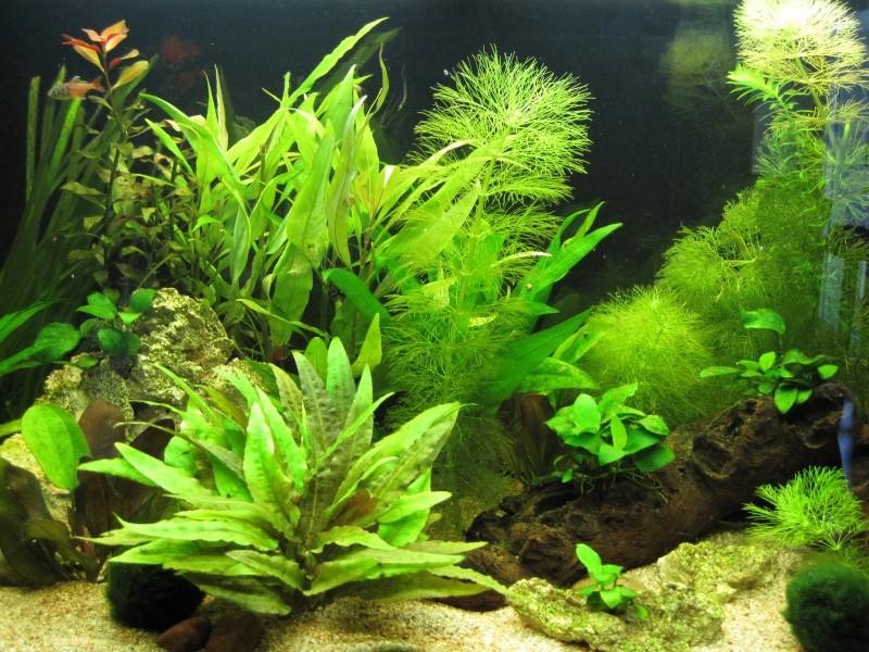 Quelques photos de mon aquarium Img_0010