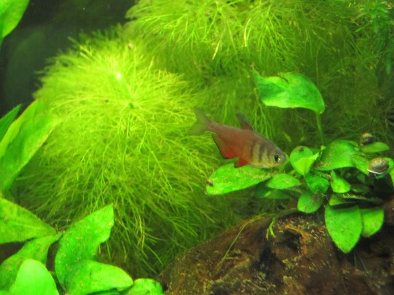 Quelques photos de mon aquarium Img_0011