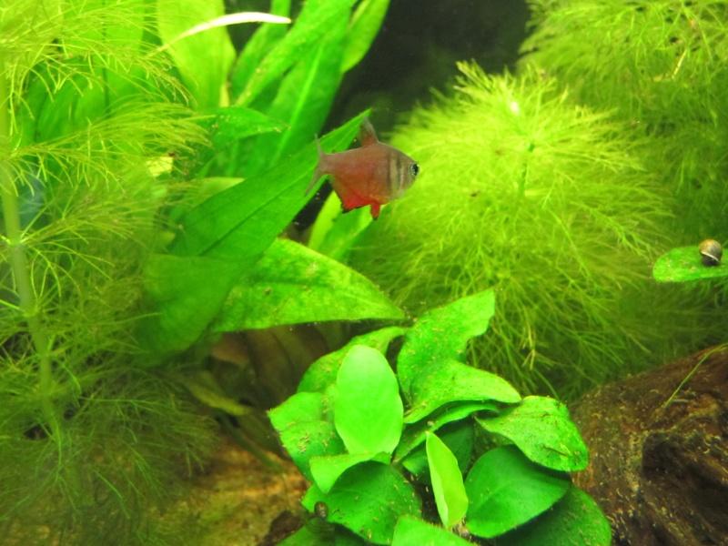 Quelques photos de mon aquarium Img_0012
