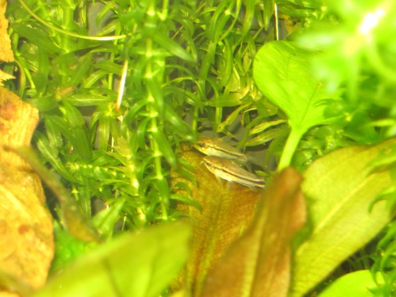 Quelques photos de mon aquarium Img_0013