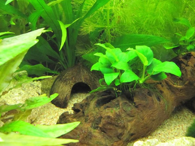 Quelques photos de mon aquarium Img_0410