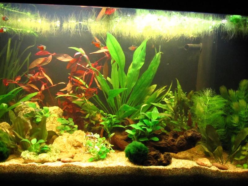 Quelques photos de mon aquarium Img_0610