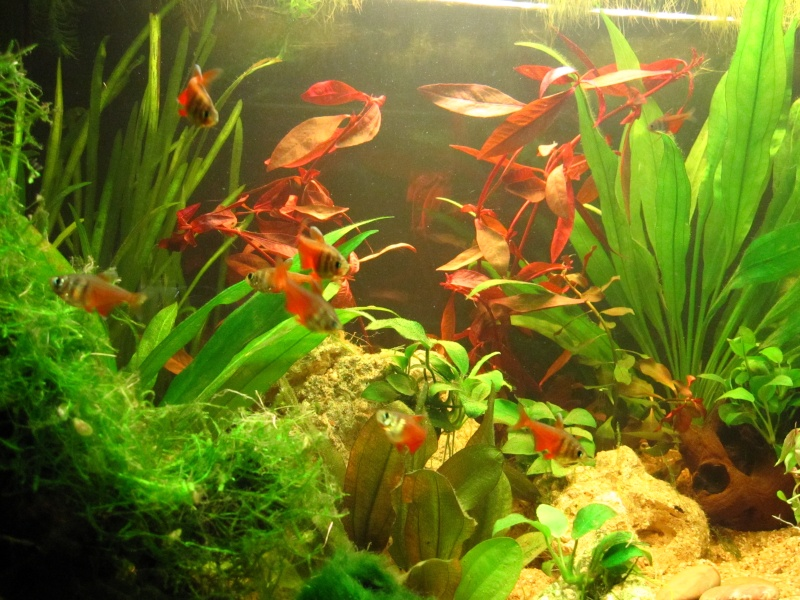 Quelques photos de mon aquarium Img_0611