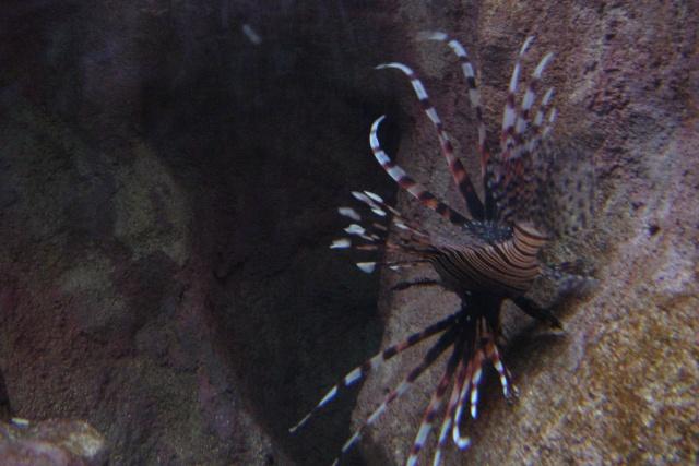 Aquariums d'Amnéville, de Nancy et Nausicââ Boulogne Photot10