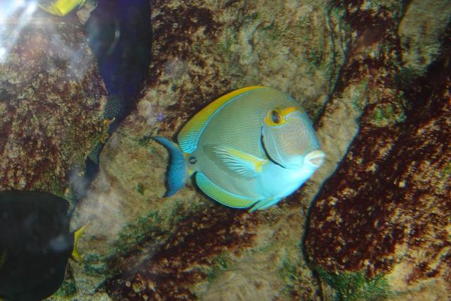 Aquariums d'Amnéville, de Nancy et Nausicââ Boulogne Photot13