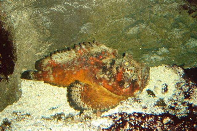 Aquariums d'Amnéville, de Nancy et Nausicââ Boulogne Photot14
