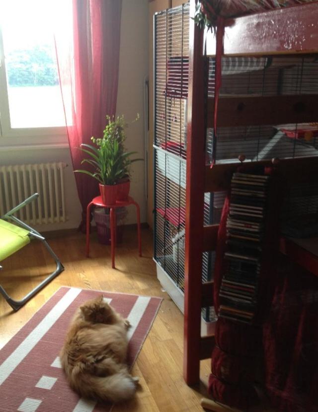 Avoir des rats quand on a des chats. - Page 5 Photo_29