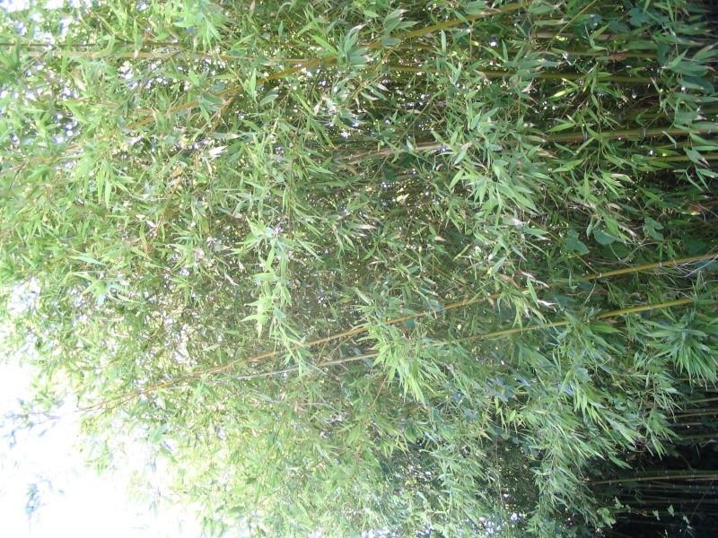 Et les bambous, c'est sur quel forum ? Img_1711