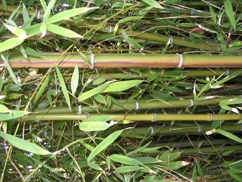Et les bambous, c'est sur quel forum ? Img_1713