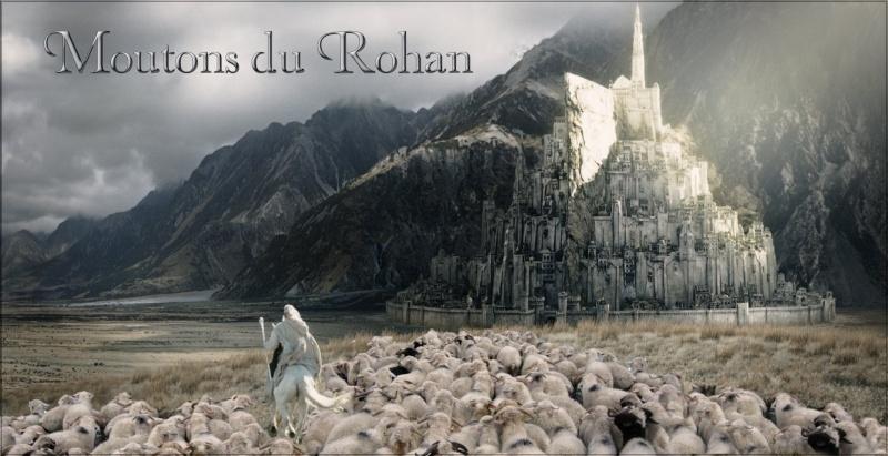 Moutons du Rohan