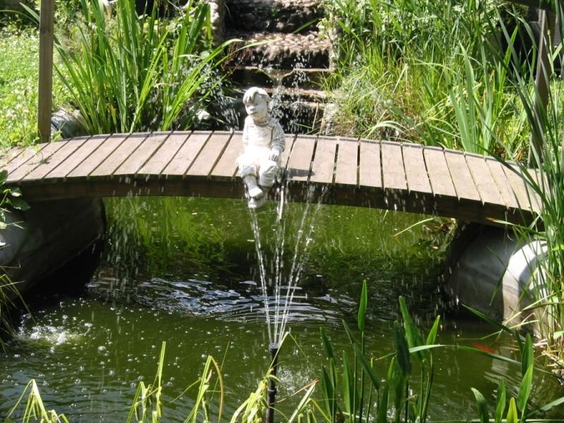 photo bassin de steven Img_0018