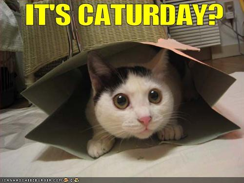 ITS CATURDAY!!!!! POST CATS!!! Funny-10