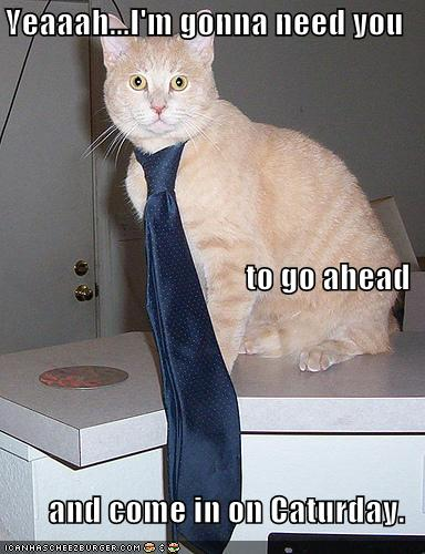 ITS CATURDAY!!!!! POST CATS!!! Funny-11