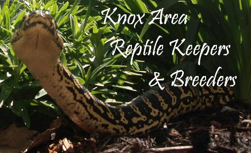 Knox Area Reptile Keepers