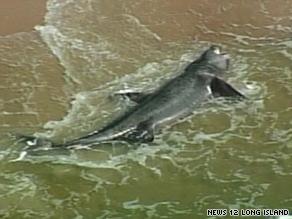 5,000-pound shark washes ashore on Long Island (15/07/09) Art_sh10
