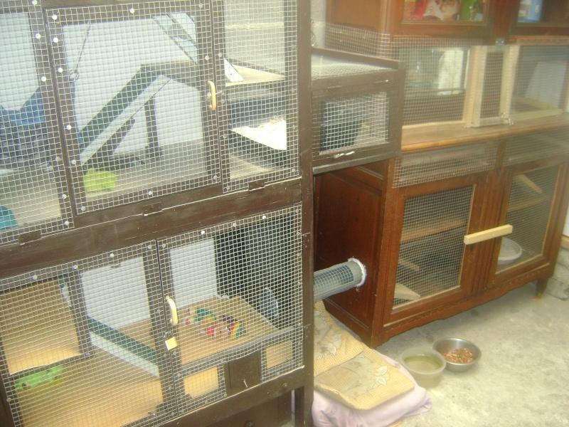 Leurs cages 09070810