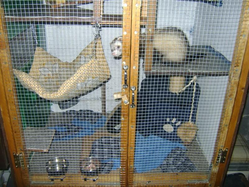 Leurs cages Dsc02010