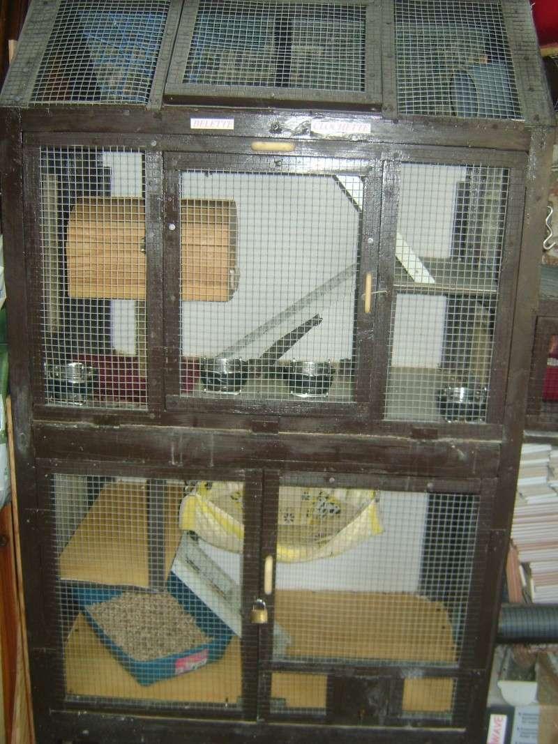 Leurs cages Dsc02315
