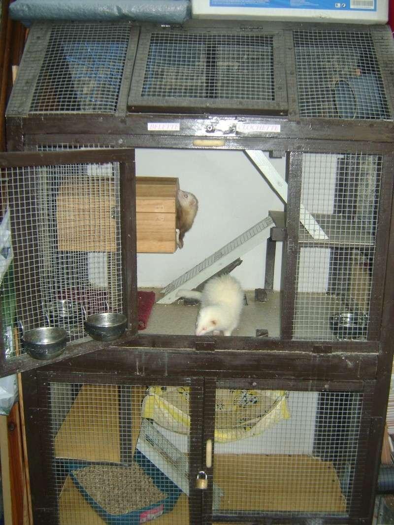 Leurs cages Dsc02316