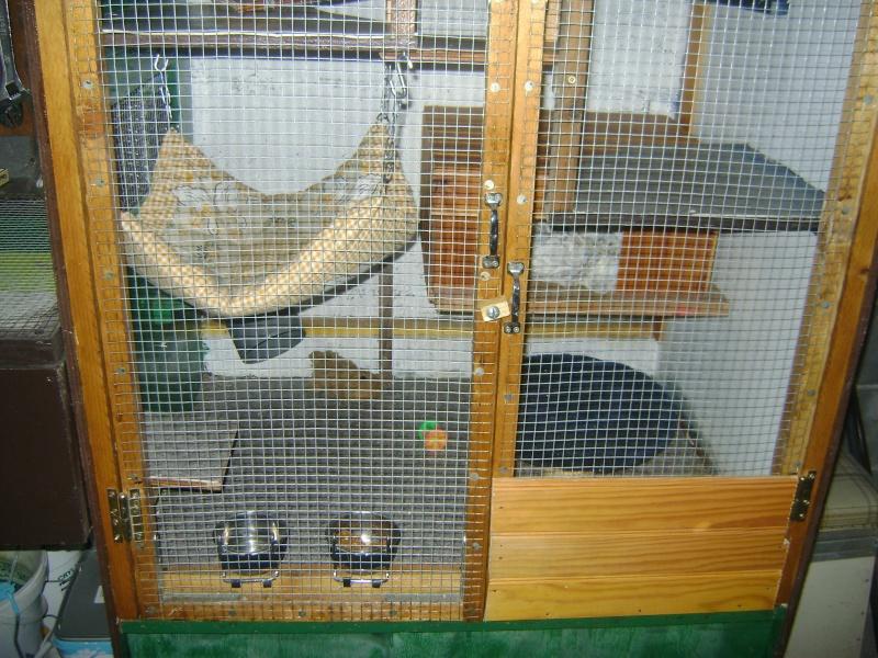 Leurs cages Dsc02317