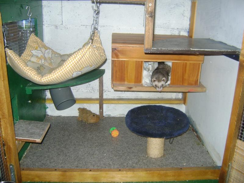 Leurs cages Dsc02319