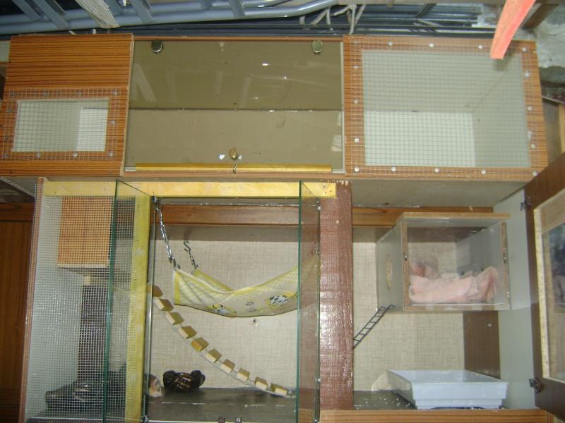 Leurs cages Dsc02321