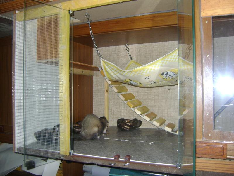 Leurs cages Dsc02322
