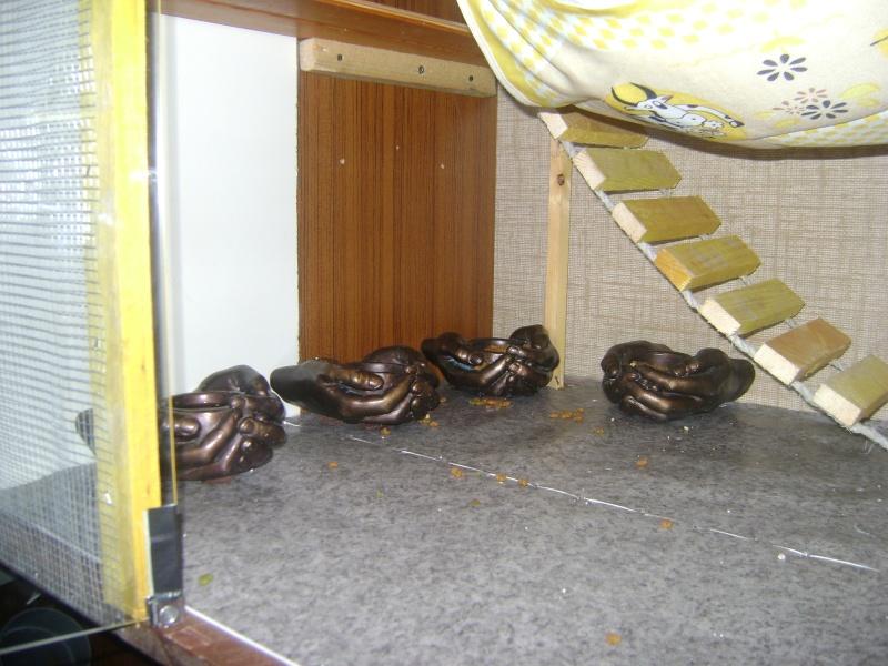 Leurs cages Dsc02323